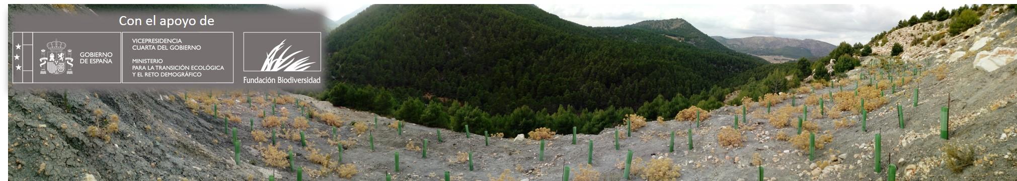 Plantación experimental en el proyecto MARBLE & BIODIVERSITY