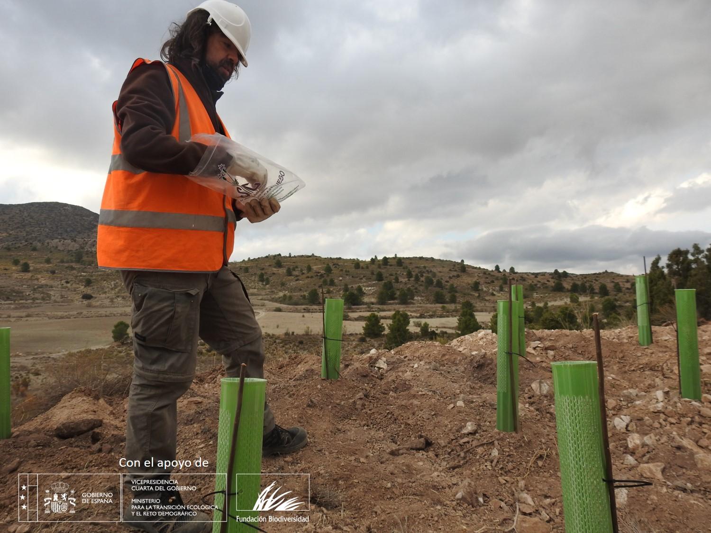 Regeneración vegetal en el área de explotación de pantano