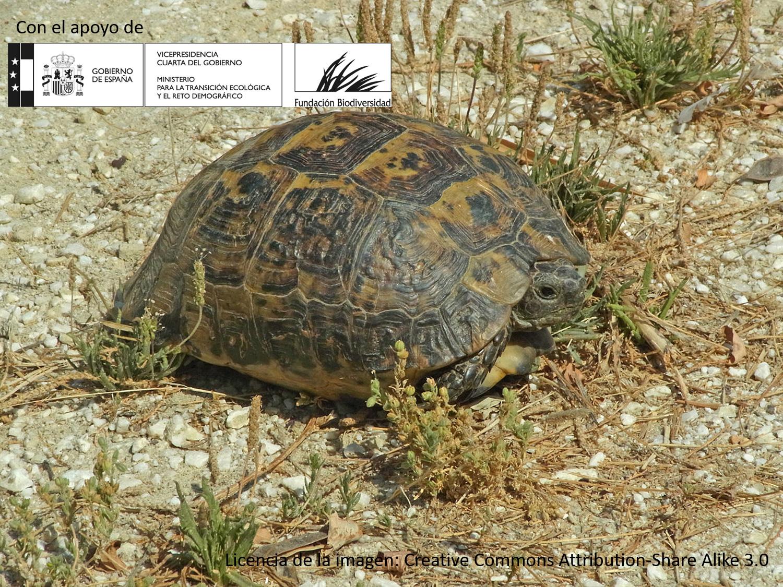 Modelización de hábitats naturales de la tortuga mora para la mejora de conectividad en canteras