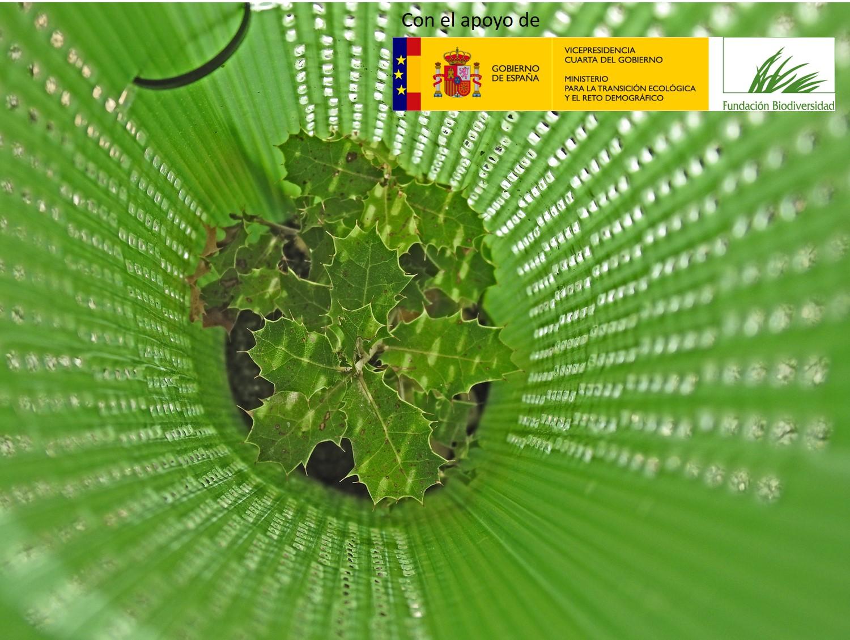 Marble & Biodiversity: La monitorización de las plantaciones y siembras experimentales realizadas determina un gran éxito con más del 97% de supervivencia