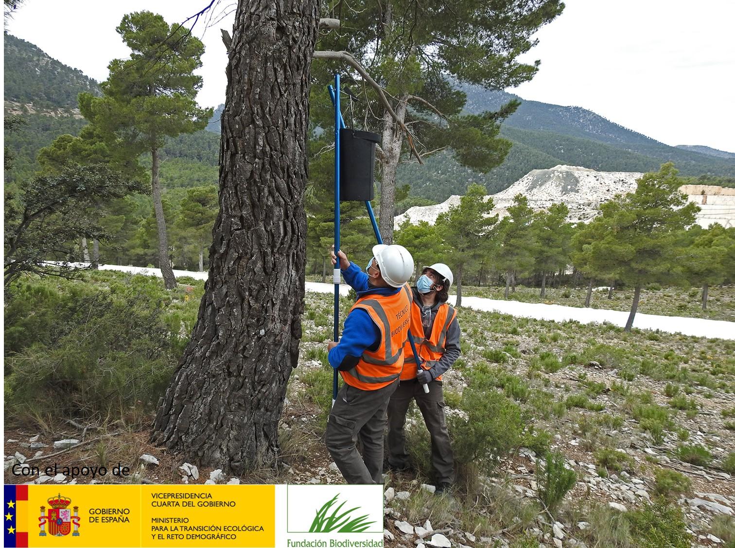 Fomentamos la biodiversidad a través de la colocación de refugios para quirópteros dentro del proyecto Marble & Biodiversity