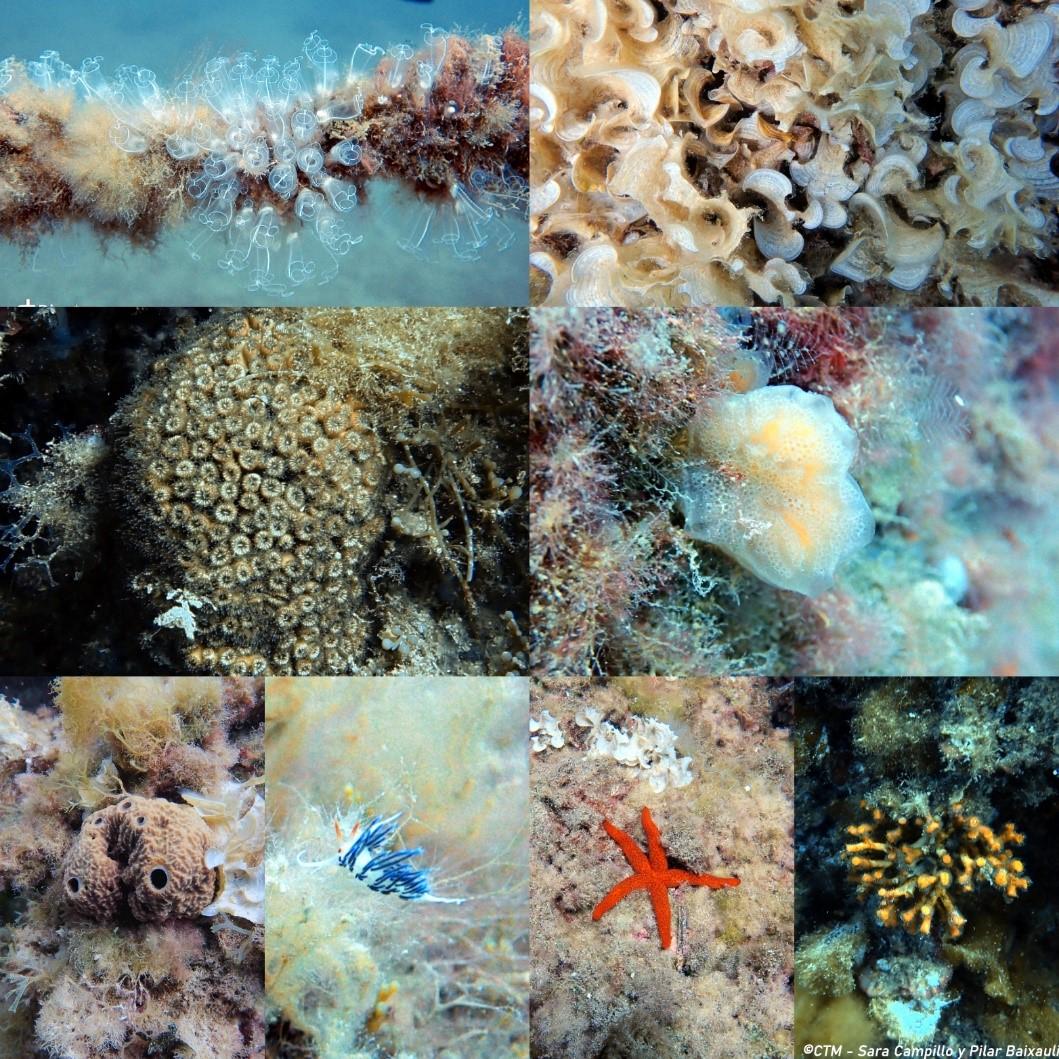 Biólogas del CTM realizan las primeras inmersiones de reconocimiento de hábitats y especies para preparar la formación del proyecto ReReef – Técnicas de restauración ecológica con arrecifes artificiales para espacios de la Red Natura 2000